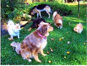 How To Stop Female Dog Urine From Burning Grass