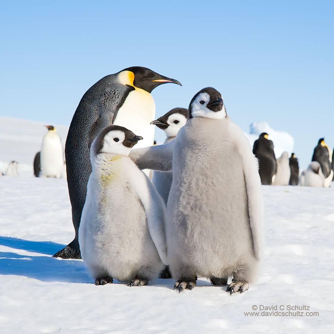 10 Gambar Penguin Lucu Dan Unik Gambar Top 10