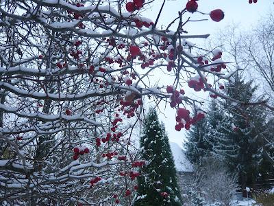 боярышник на снегу