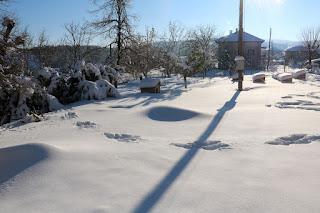 The sun comes out over our snowy patio