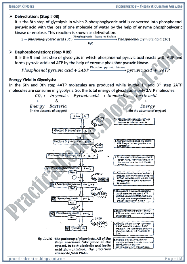 Bioenergetics - Theory And Questions Answers - Biology XI