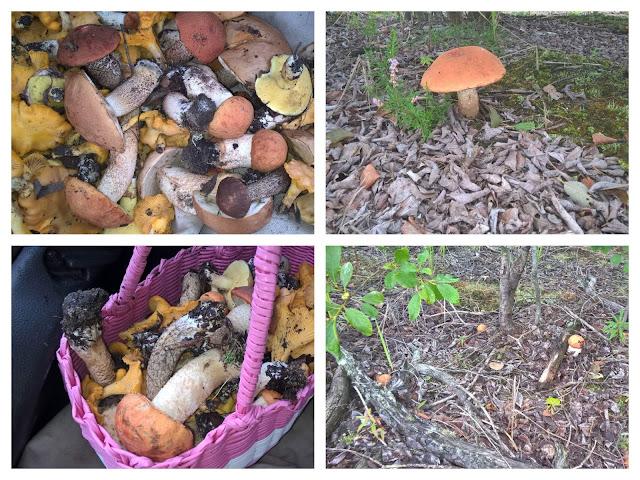 Как заморозить грибы на зиму в домашних условиях в холодильнике или морозилке