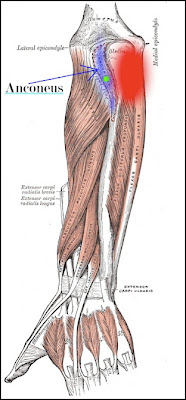 TRAIN OUT PAIN: Small Overlooked Muscles: Anconeus for