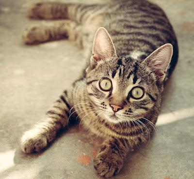 adopcja kota