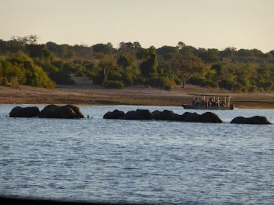Elefantes cruzando el río Kwando