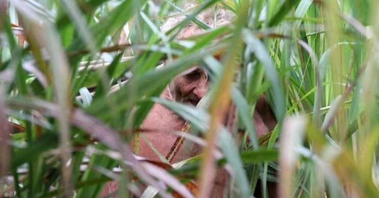 Gerçek Tarzan'ın ormandaki yaşamı tahmin ettiğinden daha zorlu başlamıştı.