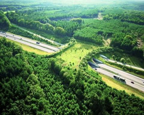 Amazing Animal Bridges, Highway A50 in The Netherlands