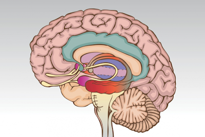 Brain Structure and Function of Those with Bipolar Disorder