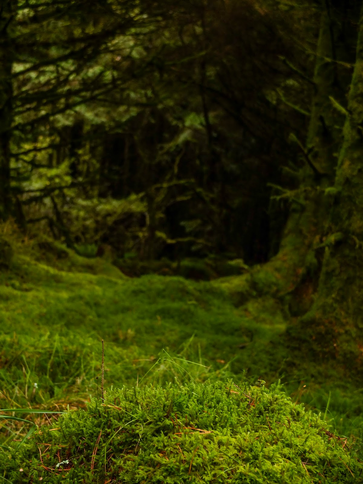 Moss covered forest floor.