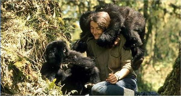 Diane Fossey mountain gorillas