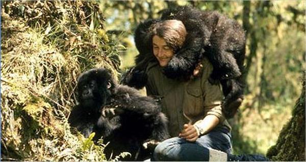 Diane Fossey mountain gorillas
