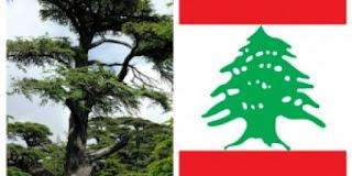 Misteri pohon Cedar di Lebanon.