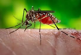 Kesan Jangkita Virus Zika Kepada Bayi