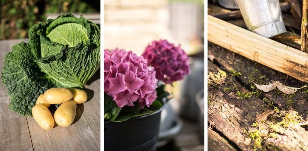 Herbst im Garten by fim.works Lifestyle Blog