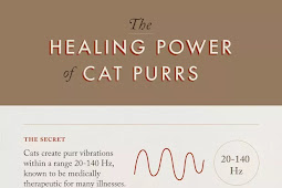 4 BRILIANT WAYS CATS ARE HELPING THEIR OWNER LIVE HEALTHIER LIVES