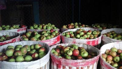 Jual Apel Manalagi Di Jakarta