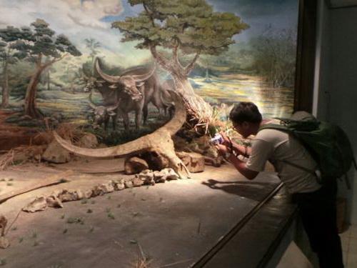 Tinuku.com Travel Sangiran Museum and paleo sites displaying early human Pithecanthropus erectus and variety ancient life