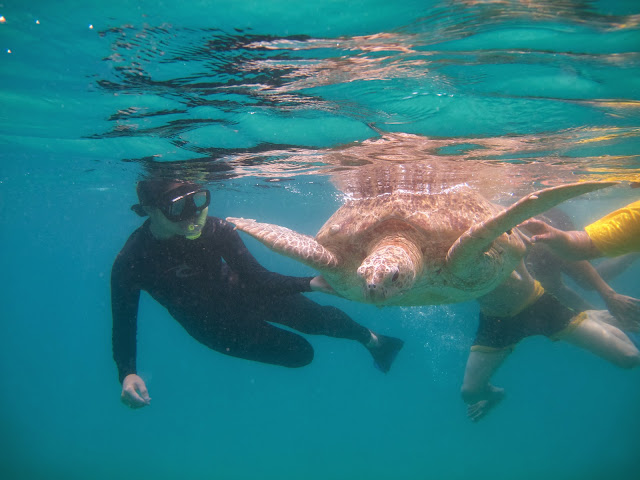 Image result for snorkeling di turtle pulau perhentian