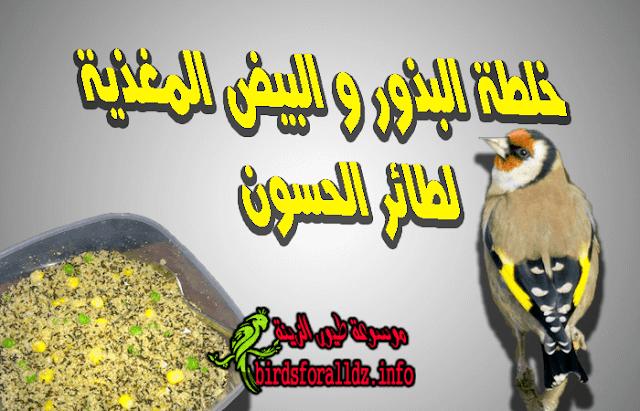 خلطة البذور و البيض المغذية لطائر الحسون