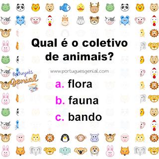 Coletivo de animais - Qual é o coletivo de animais?