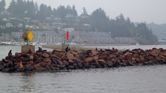 Sea lions get comfortable in Newport, OR harbour...