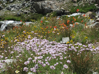Bunte Blumen zwischen den Granitklippen