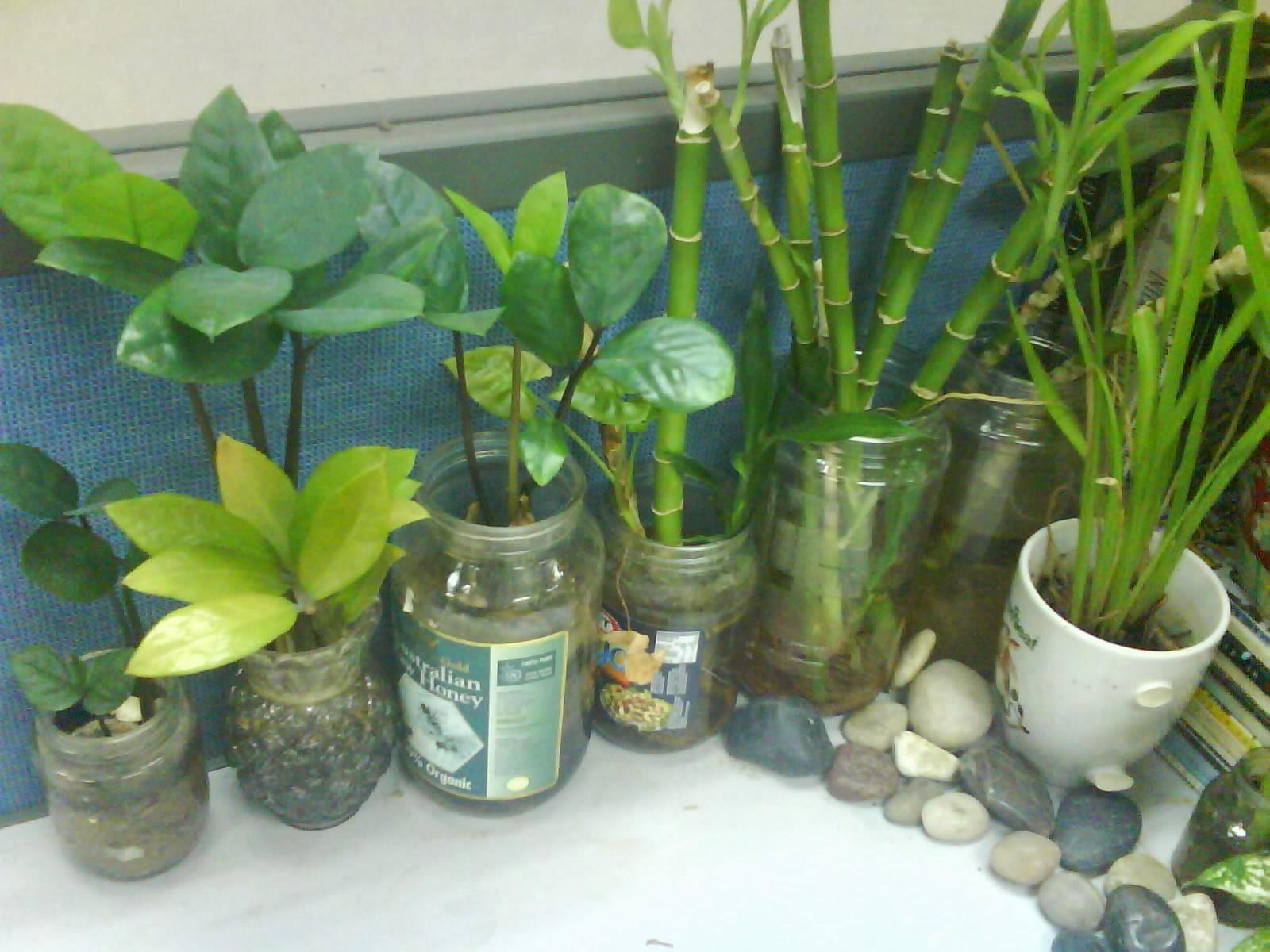 Garden Chronicles: Indoor Plants - Office Cubicle
