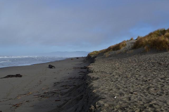 edge between dunes and beach