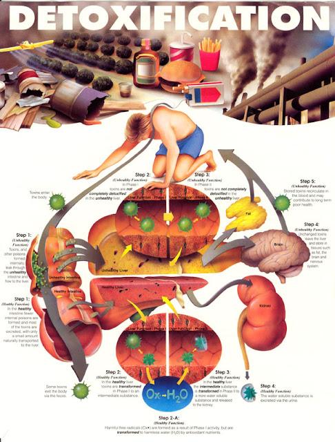 Proses Detox (detoksifiksi) Kista