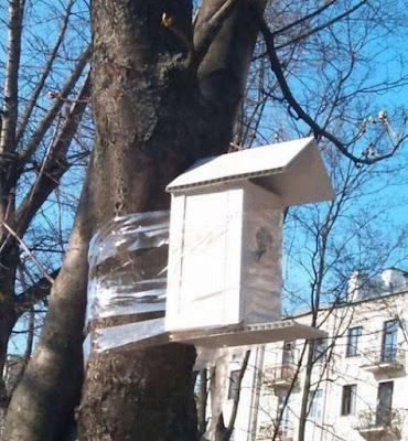 Frühling - lustiges Vogelhaus wird dumm an Baum geklebt
