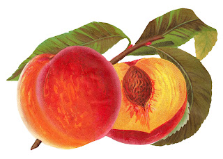peach fruit illustration digital clipart image printable