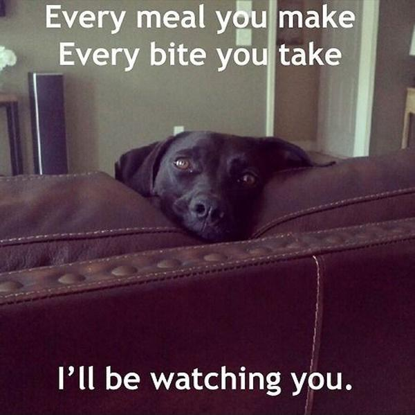 Every meal you make, every bite you take I'll be watching you
