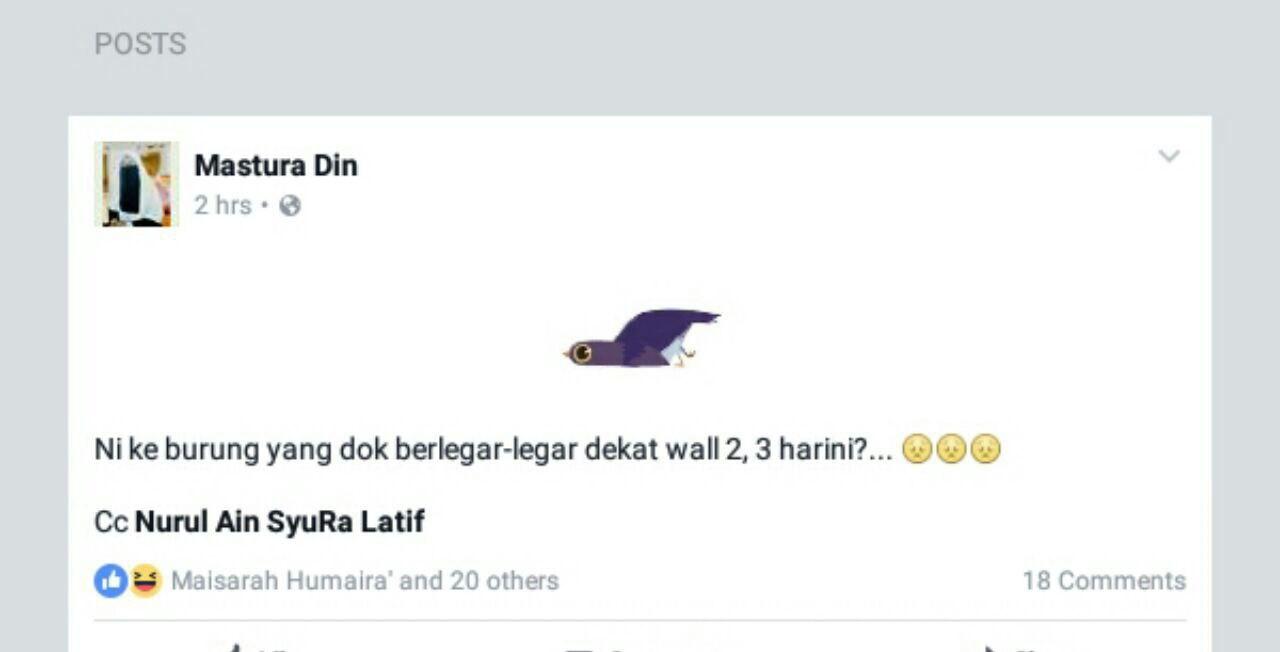 Burung ungu ni datang dari mana sebenarnya, kisah burung yang menjadi viral di facebook, karangan spm