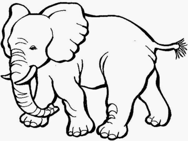 14 elephant coloring pages  Printable and Colors