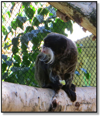 begehbare Affenanlage