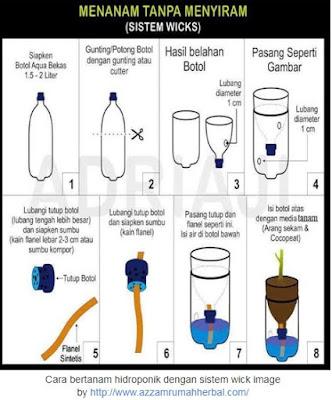 Teknik Cara Bertanam Hidroponik Bagi Pemula