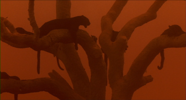 Tree of panthers in CAT PEOPLE (1982)