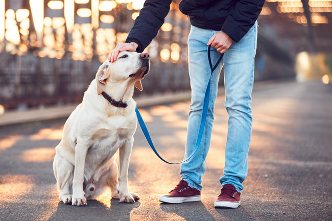 Smycze odblaskowe dla psa