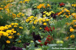 IGA: Sommerblumen
