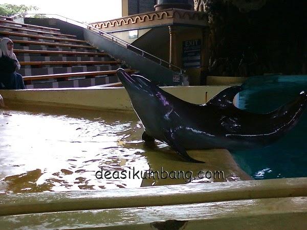 Pertunjukan Terbaru Lumba-Lumba Gelanggang Samudra Ancol