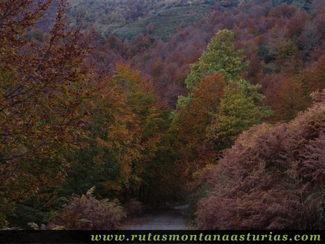 Ruta Bosque de Peloño: de collada Granceno al roblón