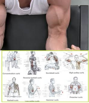 The Top 6 Exercises For Increasing Bicep Mass