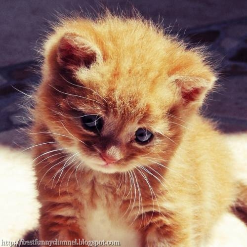 Cute red kitten.