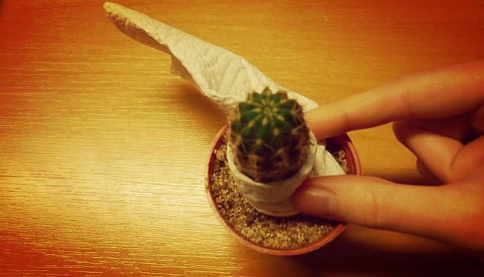 Manipular cactus