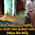 Amazing News In Sri Lanka