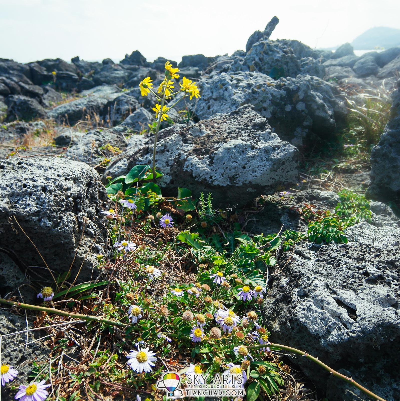 Jeju Island Beaches: 12 Things To Do In Udo Island, Jeju-do