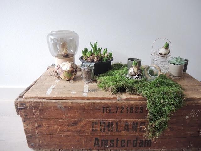 Urban Jungle Inspiratie : Muy bien!: ¡urban jungle bloggers: creative plant pots!