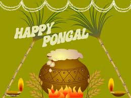 Pongal Images