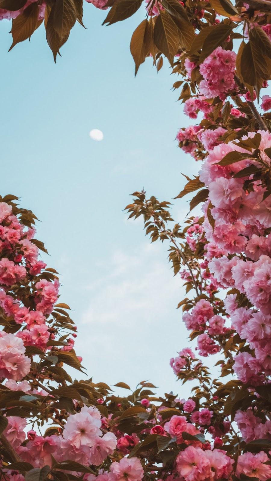 Flowers under sky