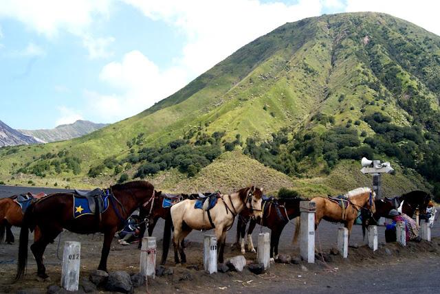 paket wisata surabaya bromo, paket tour bromo murah dari surabaya, paket wisata murah surabaya bromo